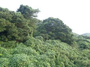 太田和の森
